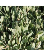 Les végétaux des marais bio de Terre Saline