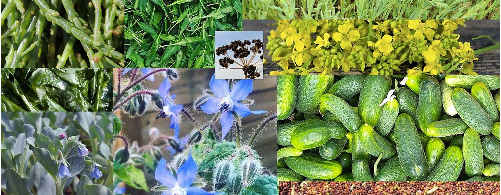 Plantes Bio des Marais